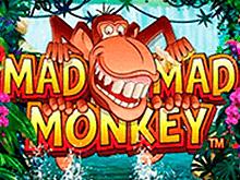 Mad Mad Monkey играть на деньги в клубе Эльдорадо